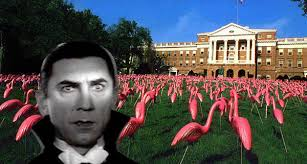 Flamingoes and Lugosi